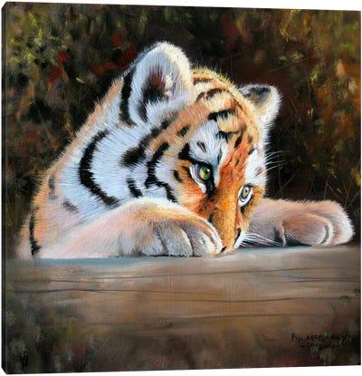 Tiger Cub Face Canvas Art Print