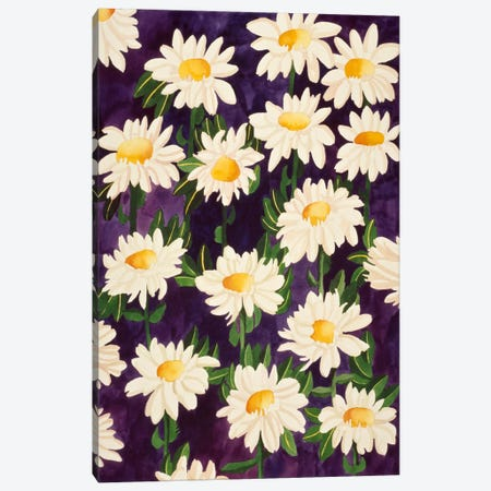Shasta Daisies Canvas Print #9597} by Mary Russell Canvas Art