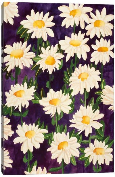 Shasta Daisies Canvas Art Print