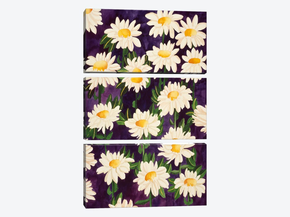 Shasta Daisies by Mary Russell 3-piece Canvas Art Print