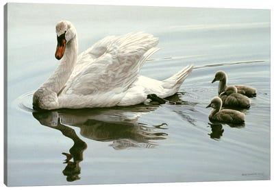 Mute Swan & Three Cygnets Canvas Art Print