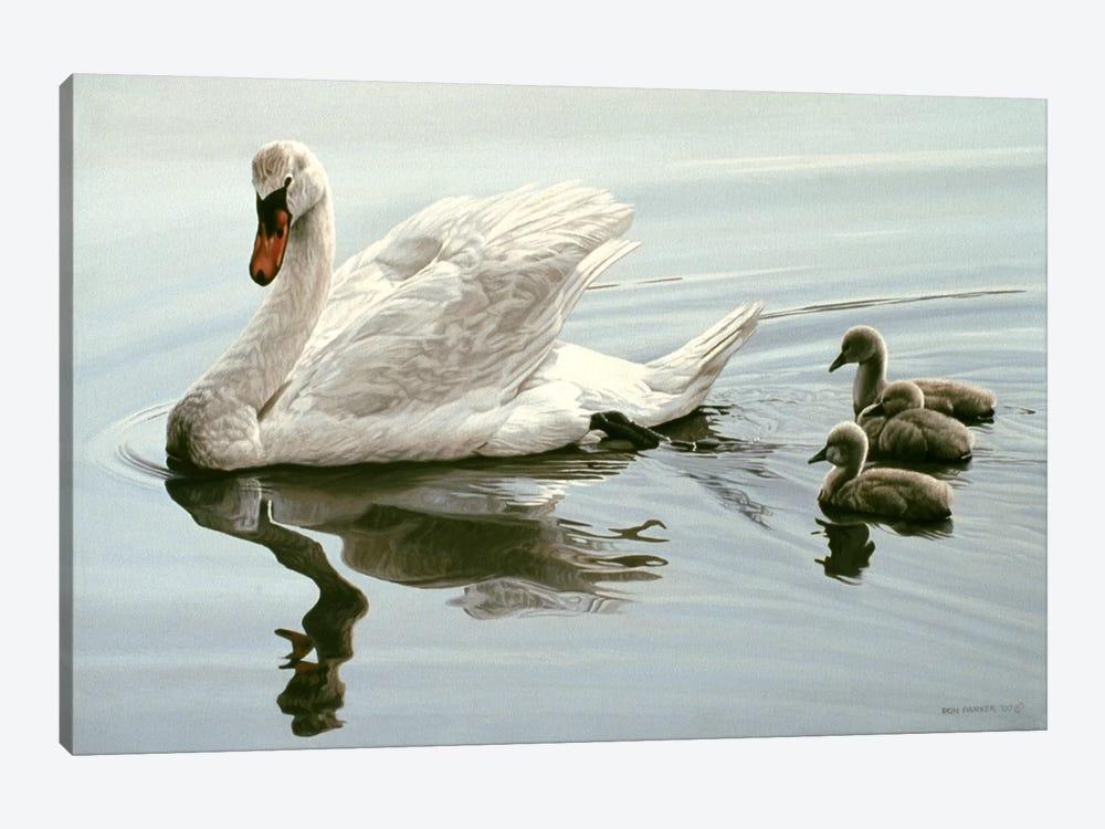 Mute Swan & Three Cygnets by Ron Parker 1-piece Canvas Art Print