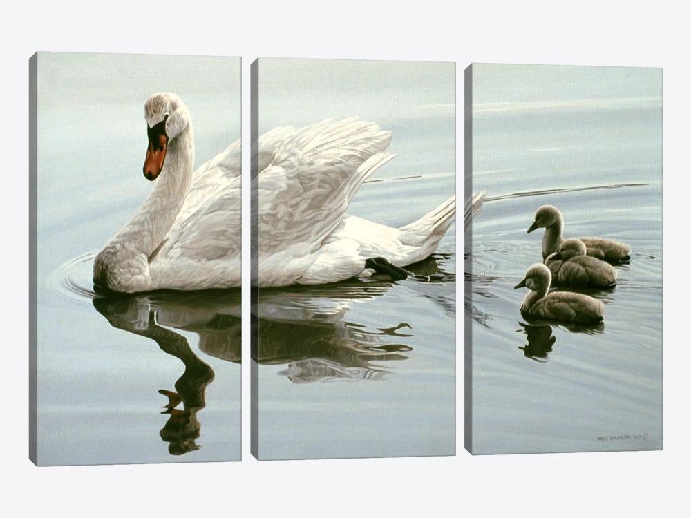 Mute Swan & Three Cygnets by Ron Parker 3-piece Canvas Art Print
