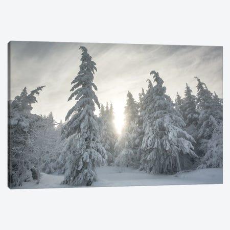 Snowy Forest Canvas Print #AAB27} by Annabelle Chabert Art Print