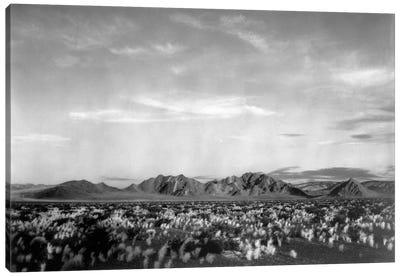 Near Death Valley National Monument Canvas Print #AAD14