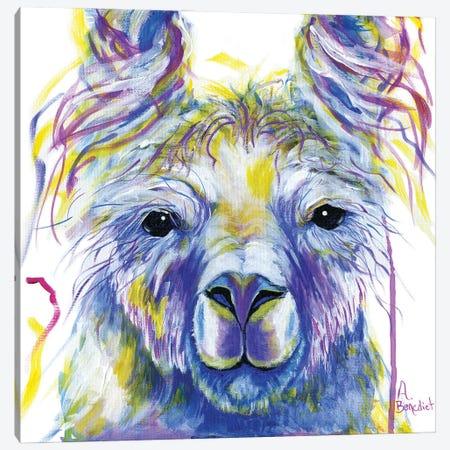 Tina Llama Canvas Print #AAH23} by A & A Arthappy Canvas Artwork