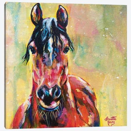 I Dream Of A Horse Canvas Print #AAH27} by A & A Arthappy Art Print