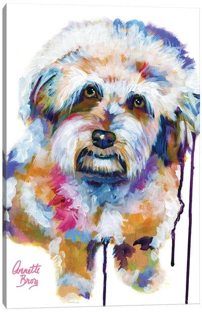 Jake The Aussie Doodle Canvas Art Print