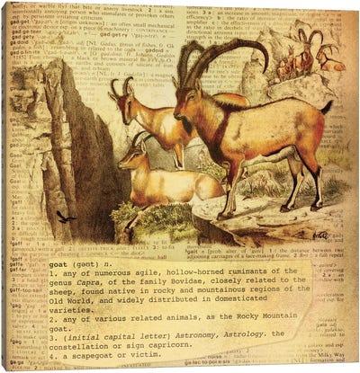 G - Goat Square Canvas Art Print