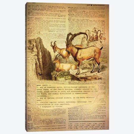 G - Goat Canvas Print #AALP14} by 5by5collective Canvas Wall Art
