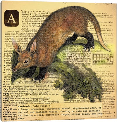A - Aardvark Square Canvas Art Print