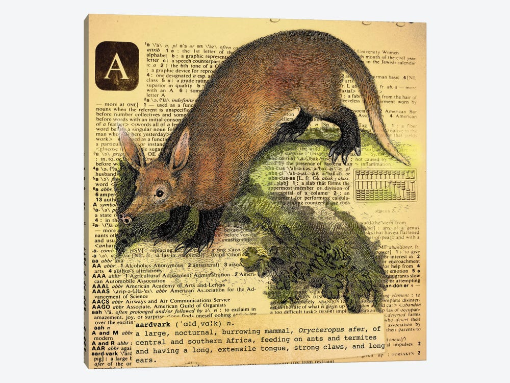 A - Aardvark Square by 5by5collective 1-piece Canvas Print