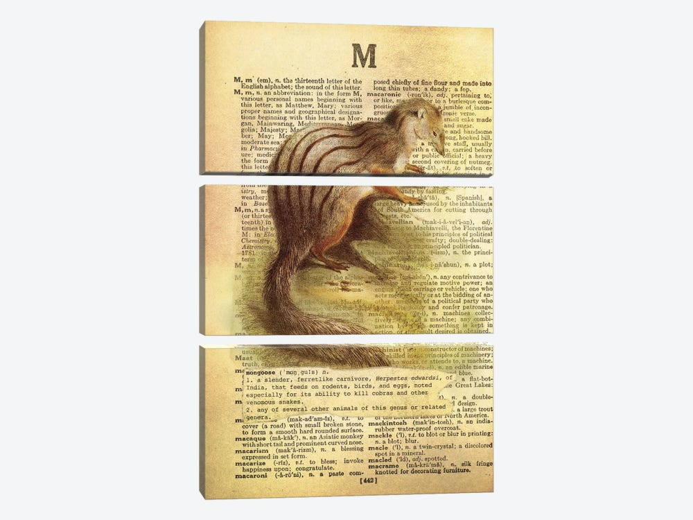 M - Mongoose by 5by5collective 3-piece Canvas Artwork