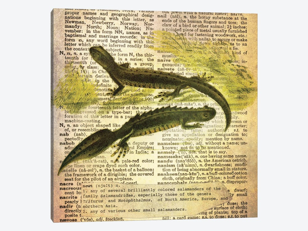 N - Newt Square by 5by5collective 1-piece Canvas Print