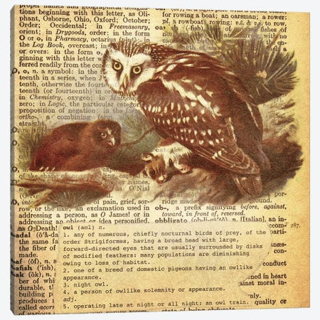 O - Owl Square Canvas Print #AALP29} by 5by5collective Canvas Artwork