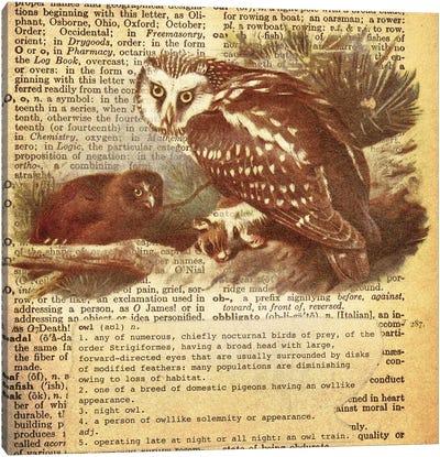 O - Owl Square Canvas Print #AALP29