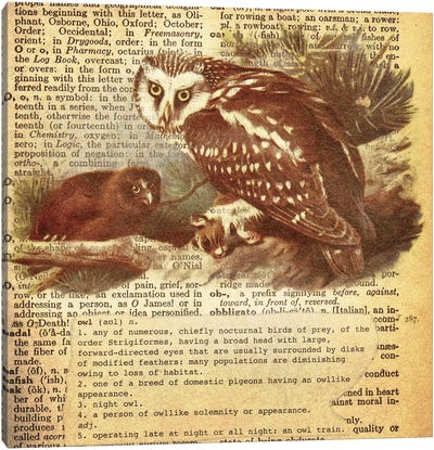 O - Owl Square Canvas Art Print