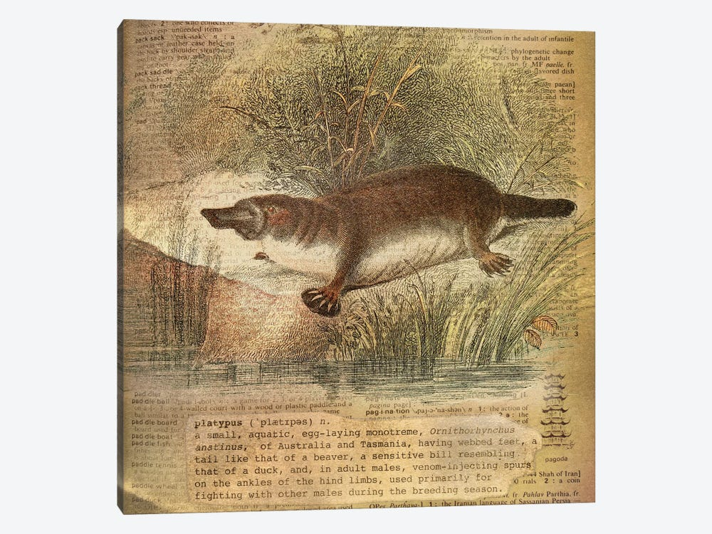 P - Platypus Square 1-piece Canvas Wall Art