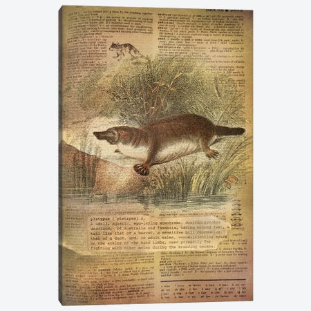 P - Platypus Canvas Print #AALP32} by 5by5collective Art Print