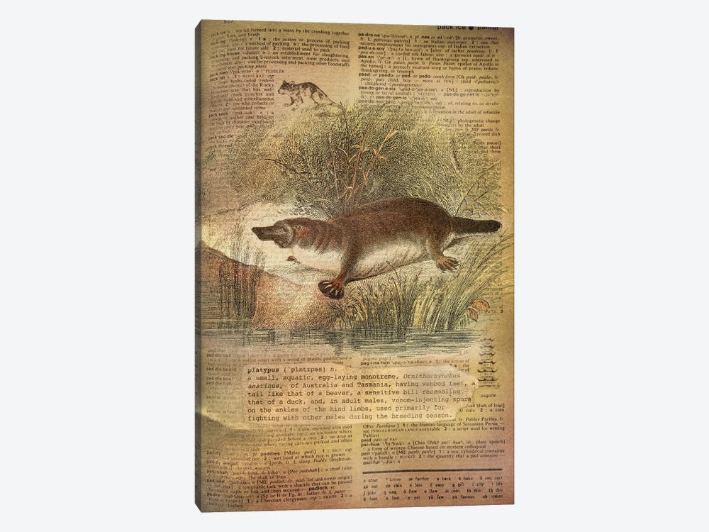 P - Platypus by 5by5collective 1-piece Canvas Print