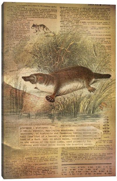 P - Platypus Canvas Art Print
