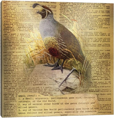 Q - Quail Square Canvas Art Print
