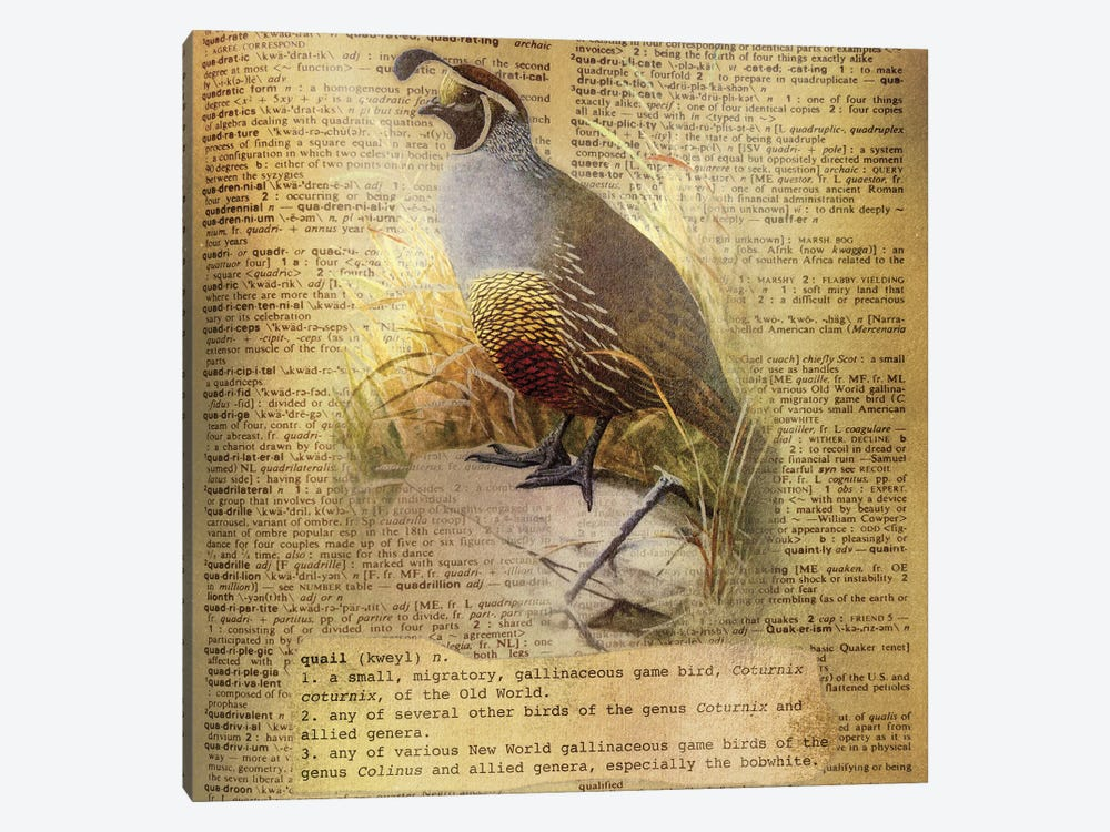 Q - Quail Square by 5by5collective 1-piece Canvas Art