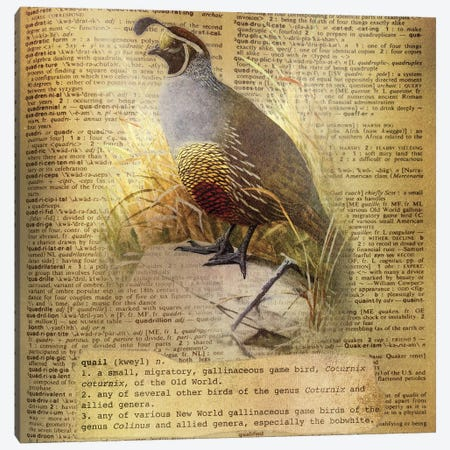 Q - Quail Square Canvas Print #AALP33} by 5by5collective Canvas Art Print