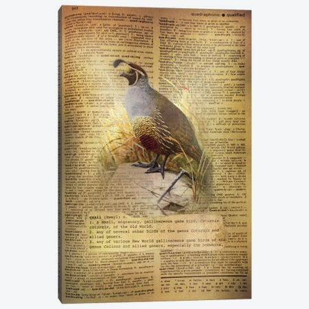 Q - Quail Canvas Print #AALP34} by 5by5collective Canvas Wall Art