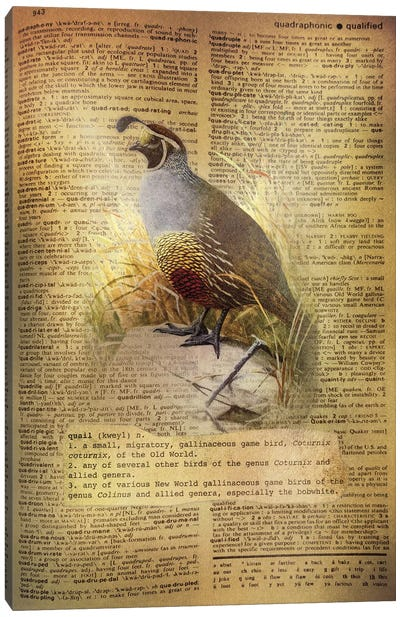 Q - Quail Canvas Art Print