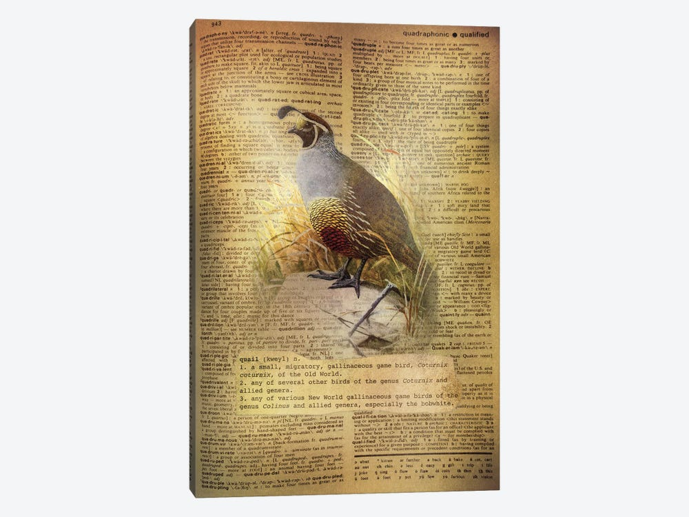 Q - Quail by 5by5collective 1-piece Canvas Art Print
