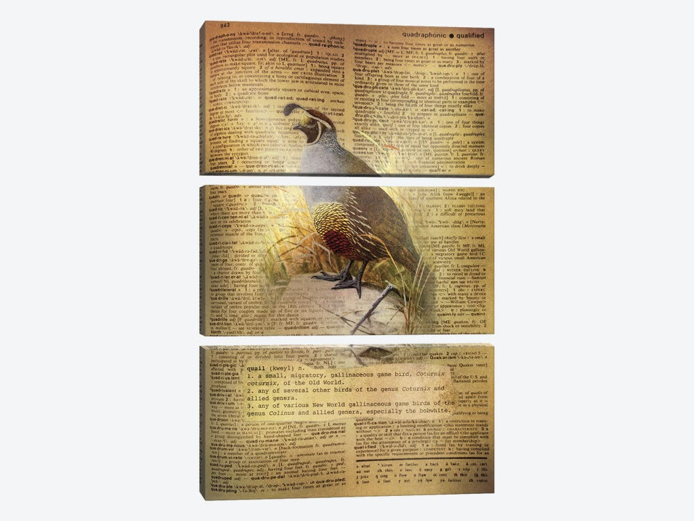 Q - Quail by 5by5collective 3-piece Art Print