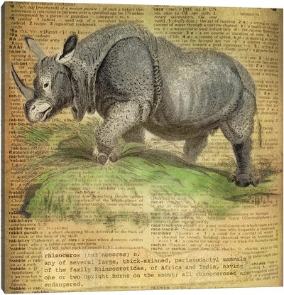R - Rhino Square Canvas Art Print