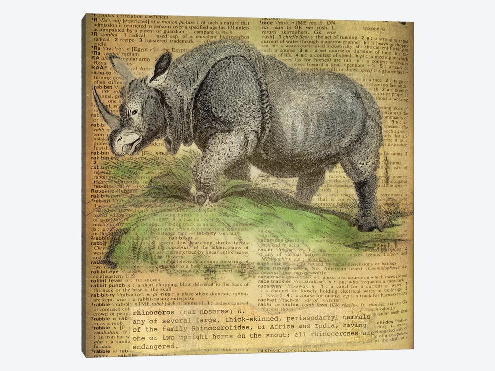 R - Rhino Square by 5by5collective 1-piece Canvas Wall Art