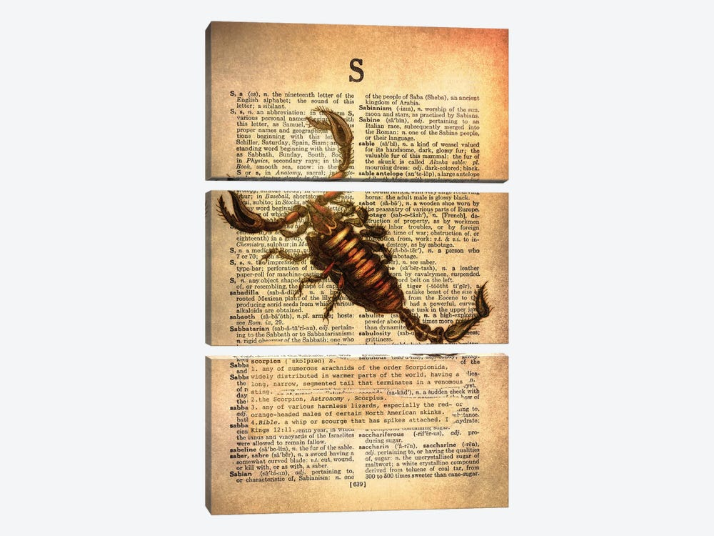S - Scorpion by 5by5collective 3-piece Canvas Art Print