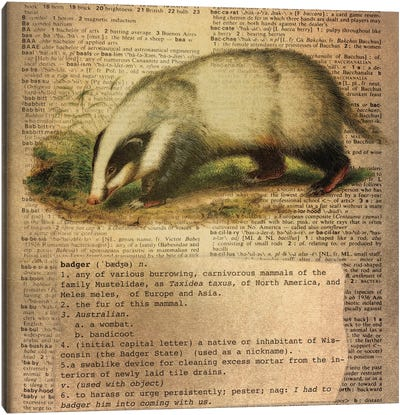 B - Badger Square Canvas Art Print