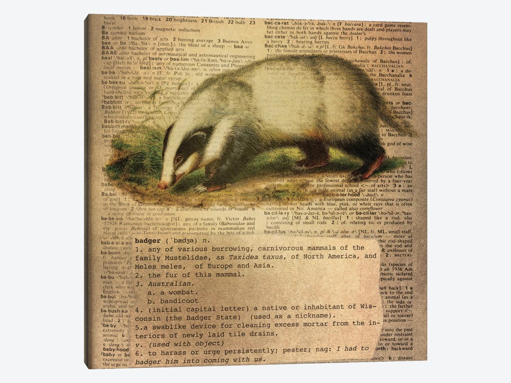 B - Badger Square by 5by5collective 1-piece Canvas Art Print