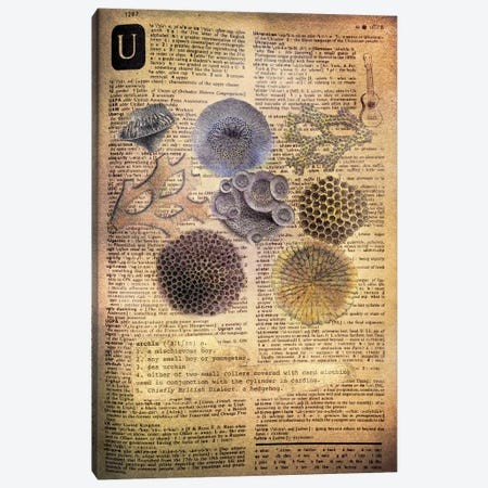 U - Urchins Canvas Print #AALP42} by 5by5collective Canvas Art