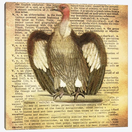 V - Vulture Square Canvas Print #AALP43} by 5by5collective Canvas Wall Art