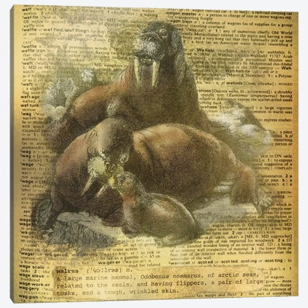 W - Walrus Square Canvas Print #AALP45} by 5by5collective Canvas Print