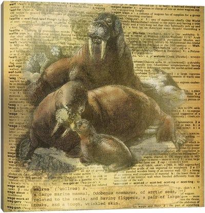 W - Walrus Square Canvas Art Print