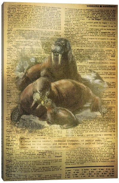 W - Walrus Canvas Art Print