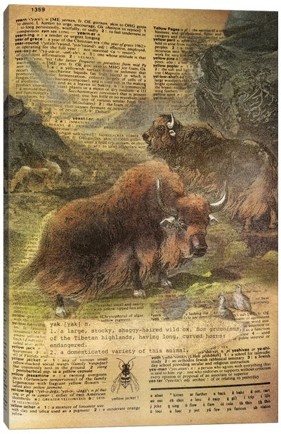 Y - Yak Canvas Art Print