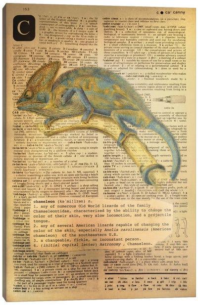 C - Chameleon Canvas Art Print