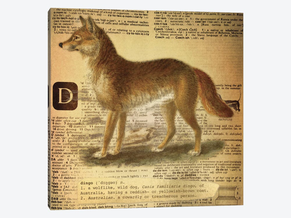 D - Dingo Square by 5by5collective 1-piece Canvas Art Print