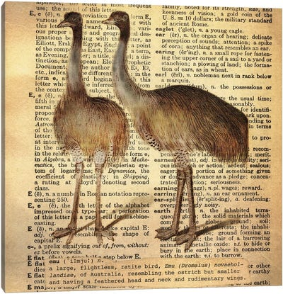 E - Emu Square Canvas Art Print