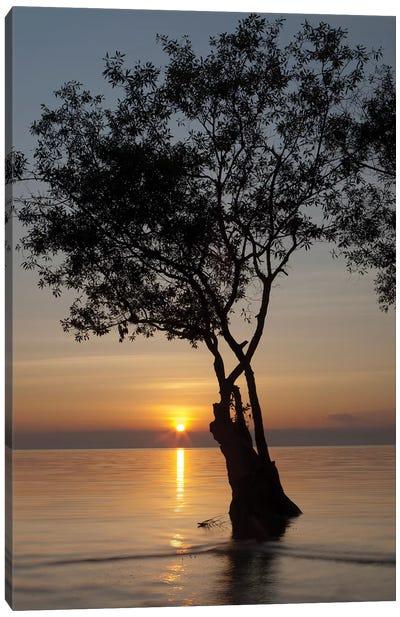Sunset Silhouette Canvas Art Print
