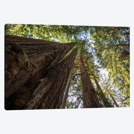 In Awe Canvas Print #AAM11} by Aaron Matheson Canvas Wall Art