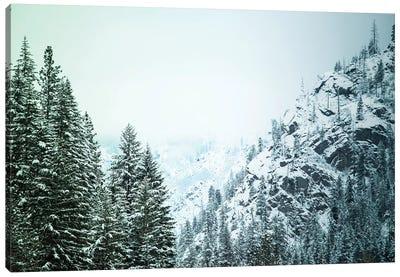Snowfall in Cascadia II Canvas Art Print