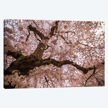 Spring's Arrival Canvas Print #AAM8} by Aaron Matheson Canvas Artwork
